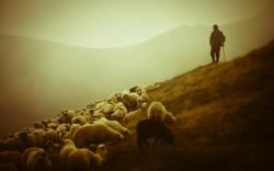 Dobrý pastýř